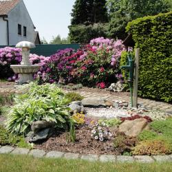 Tuin met rodedendrons